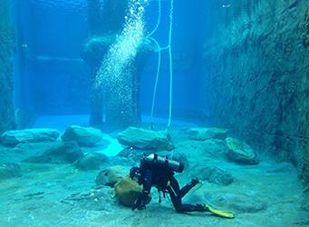 diver in seal tank