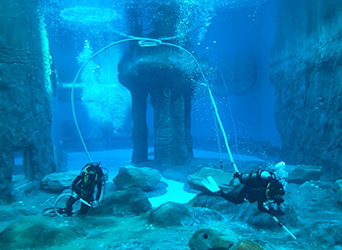 divers in seal enclosure