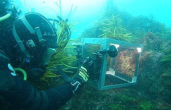 Habitat monitoring