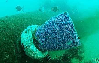 marine life on pipe