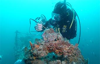 Diver at reef performing non destructive testing task