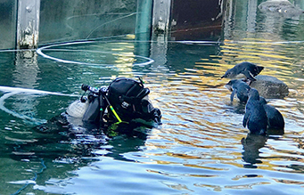 Commercial Diver and Penguins